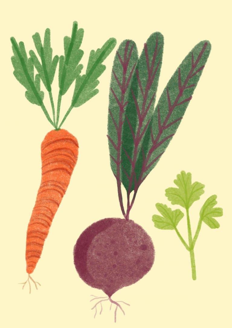 ilustracja personalizowana warzywa